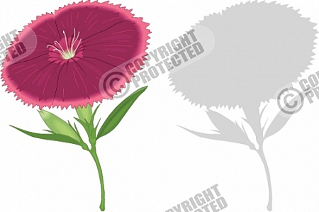 Sweet William Flower Vector Image Download.