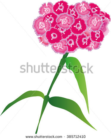 Sweet William Stock Photos, Royalty.