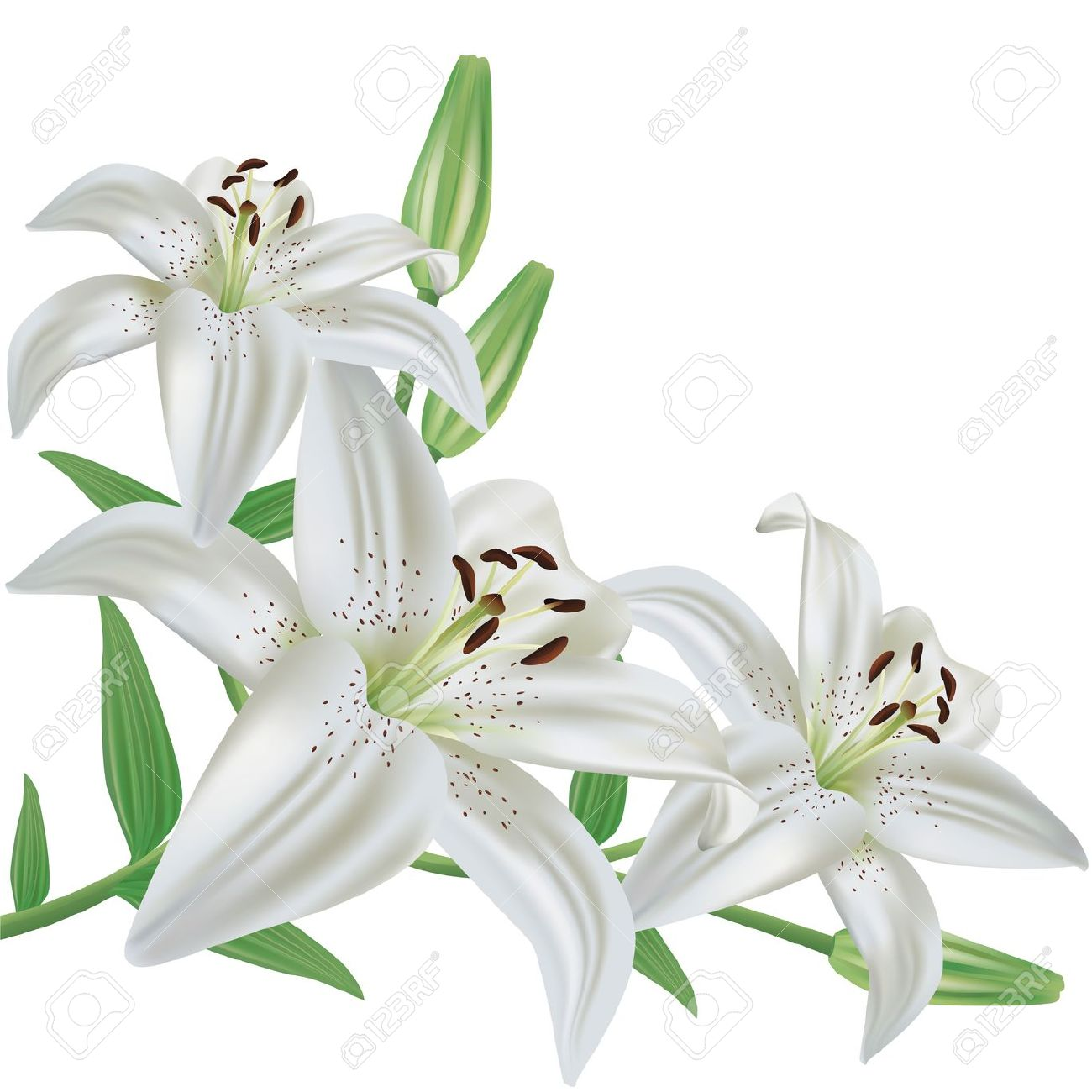 1000+ images about LILY FLOWER on Pinterest.