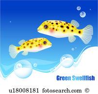 Swellfish Illustrations and Stock Art. 7 swellfish illustration.