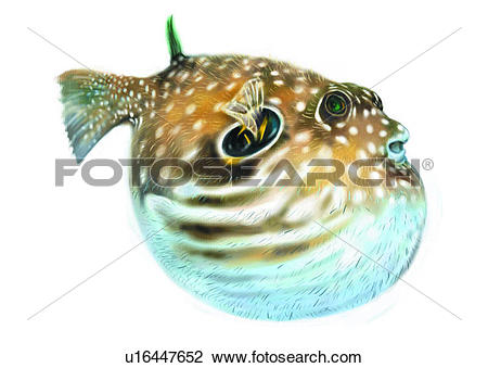 Clip Art of benthos, animal, ocean, sea, fish, vertebrate.