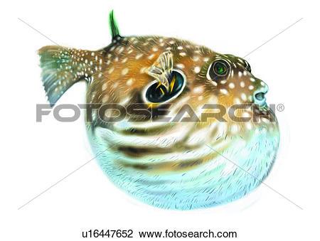 Clip Art of benthos, animal, ocean, sea, fish, vertebrate.