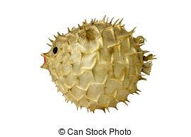 Swellfish Clip Art and Stock Illustrations. 12 Swellfish EPS.