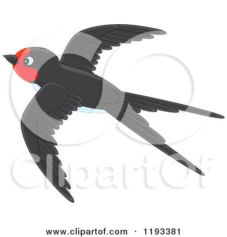 Showing post & media for Swift bird cartoon.