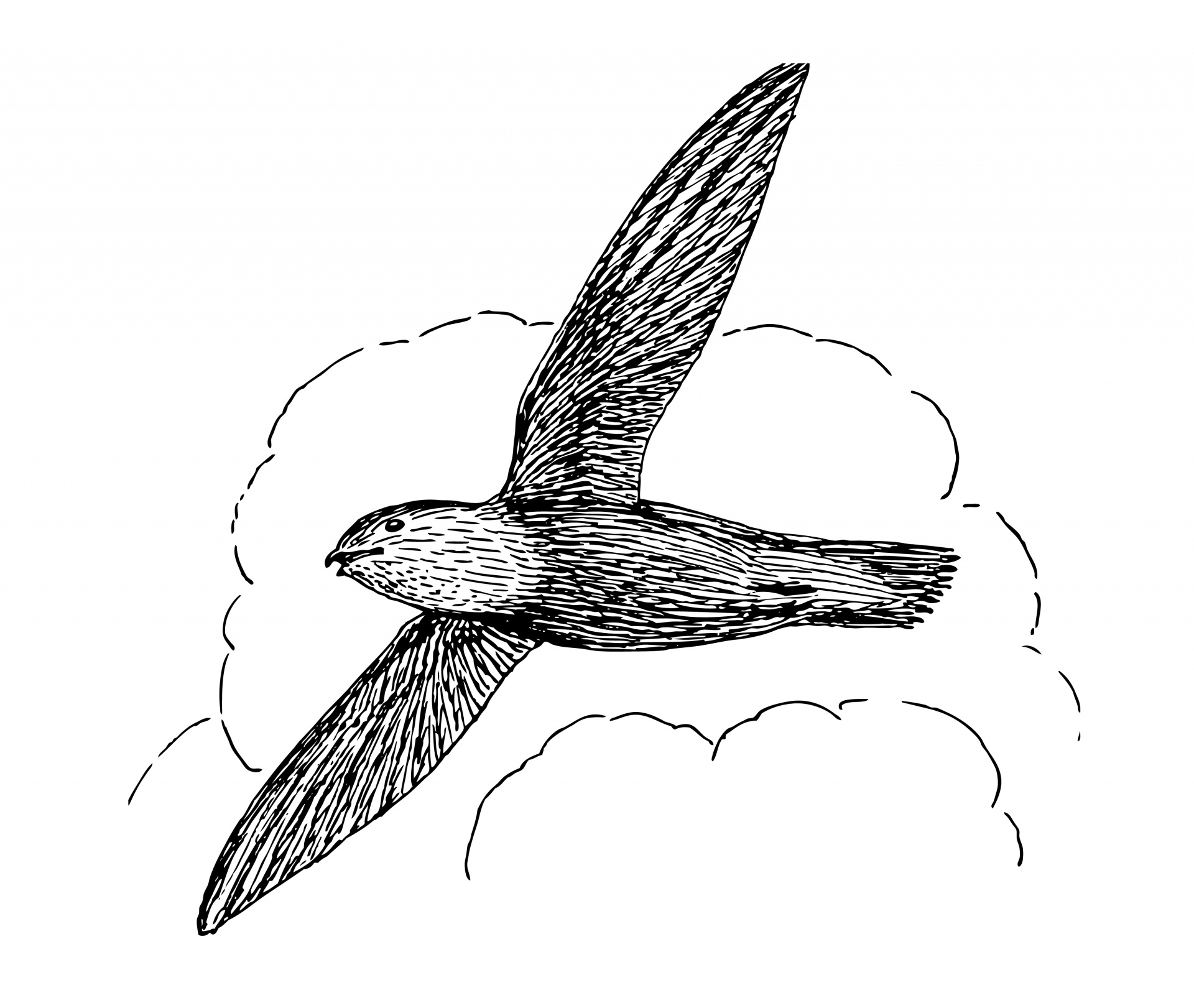 Swift Bird Clipart Illustration Free Stock Photo.