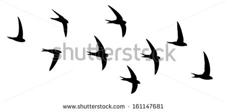 Swift Bird Stock Photos, Royalty.