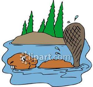 Beaver Swimming In A River Royalty Free Clipart Picture.