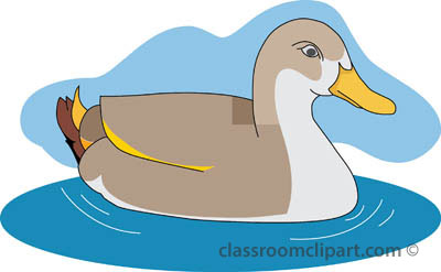 Swimming duck clipart.
