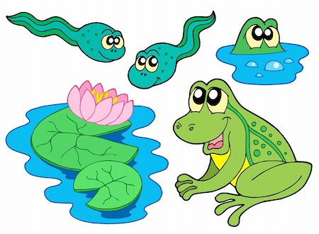 swimming frog clipart #9