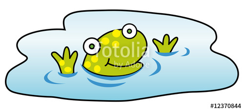 frog swimming in the pool