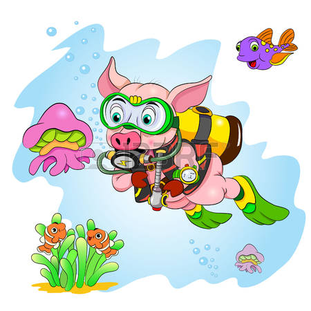 Swimming Pig Stock Photos Images. Royalty Free Swimming Pig Images.