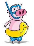 Pig Swimming Stock Illustrations.