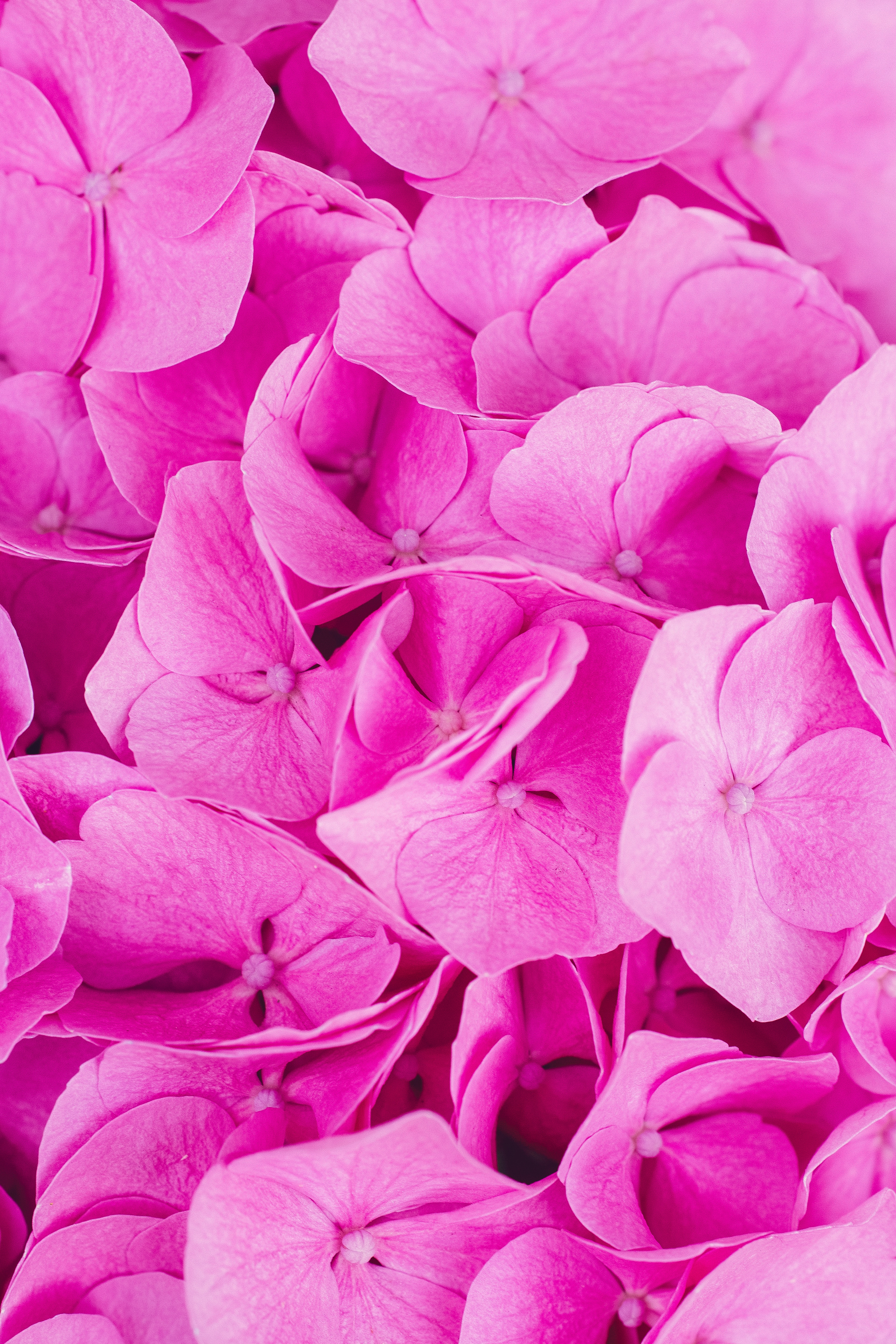 100+ Pink Flower Pictures.