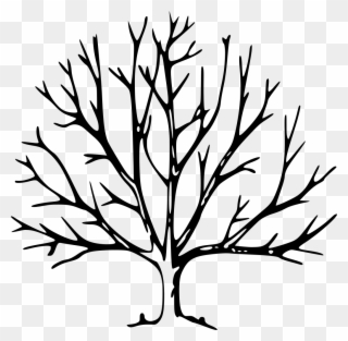 Free PNG Tree Branches Clip Art Download.