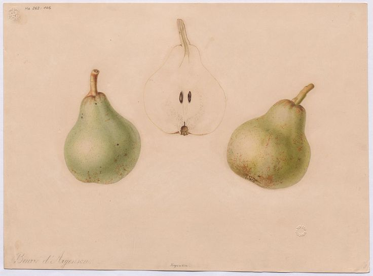 1000+ images about PEAR on Pinterest.