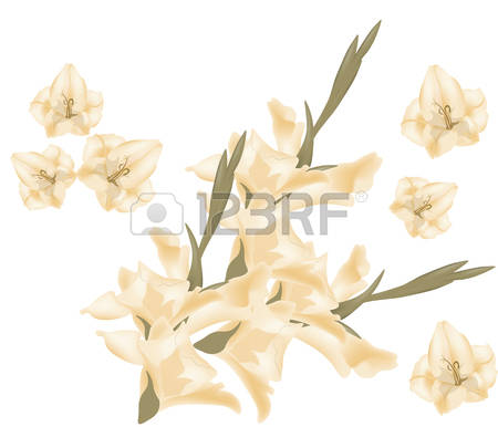 74 Sword Lily Stock Illustrations, Cliparts And Royalty Free Sword.