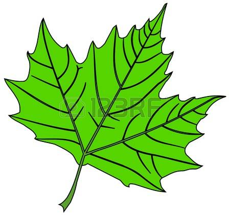 Sycamore Tree Leaf Clipart.