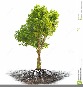 Free Sycamore Tree Clipart.
