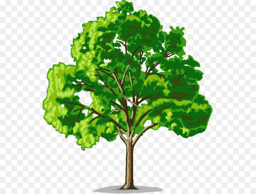 Sycamore Tree png download.