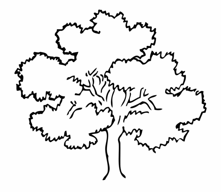 Download for free 10 PNG Oak clipart sycamore tree Images.