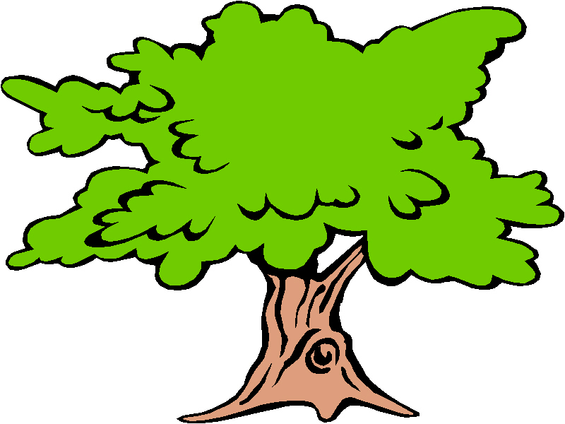 Download Sycamore Tree Clipart.