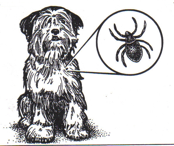 Utualism clipart dog.