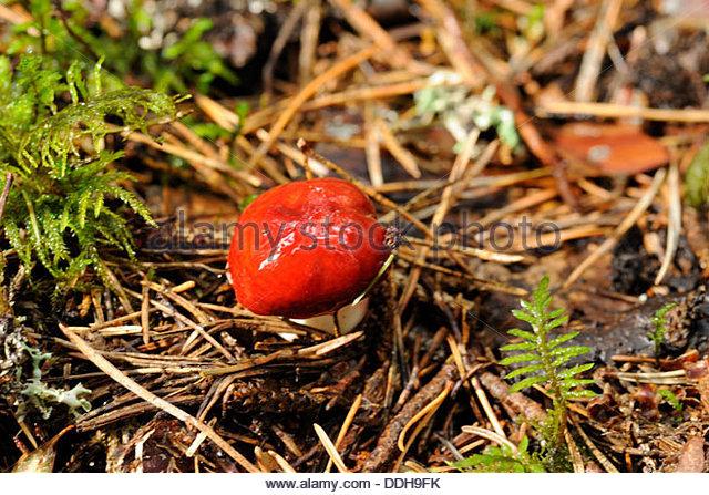 Esculent Stock Photos & Esculent Stock Images.