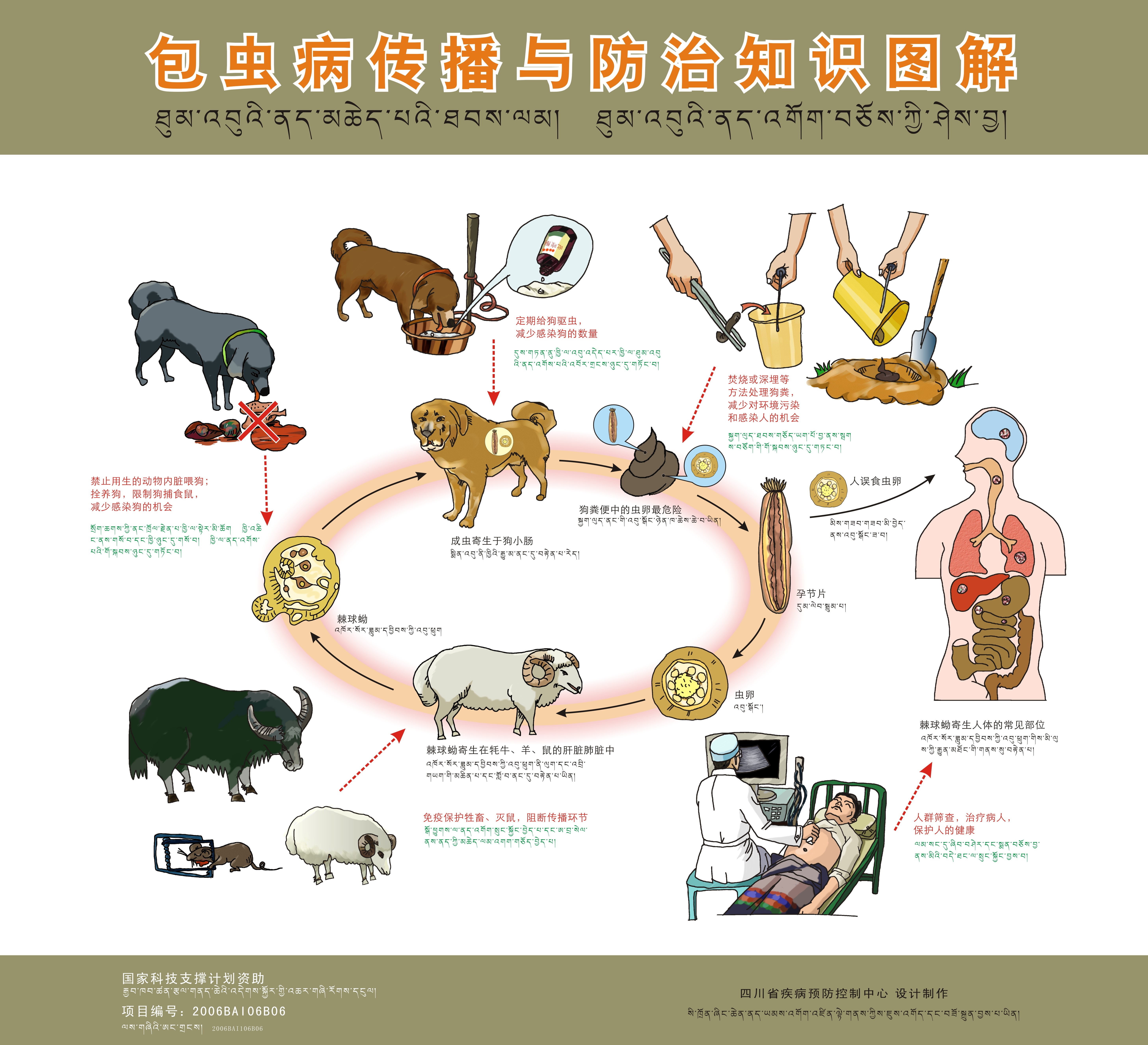Priorities for research and control of cestode zoonoses in Asia.