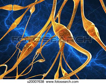 Pictures of Nerve synapses, artwork u20007638.