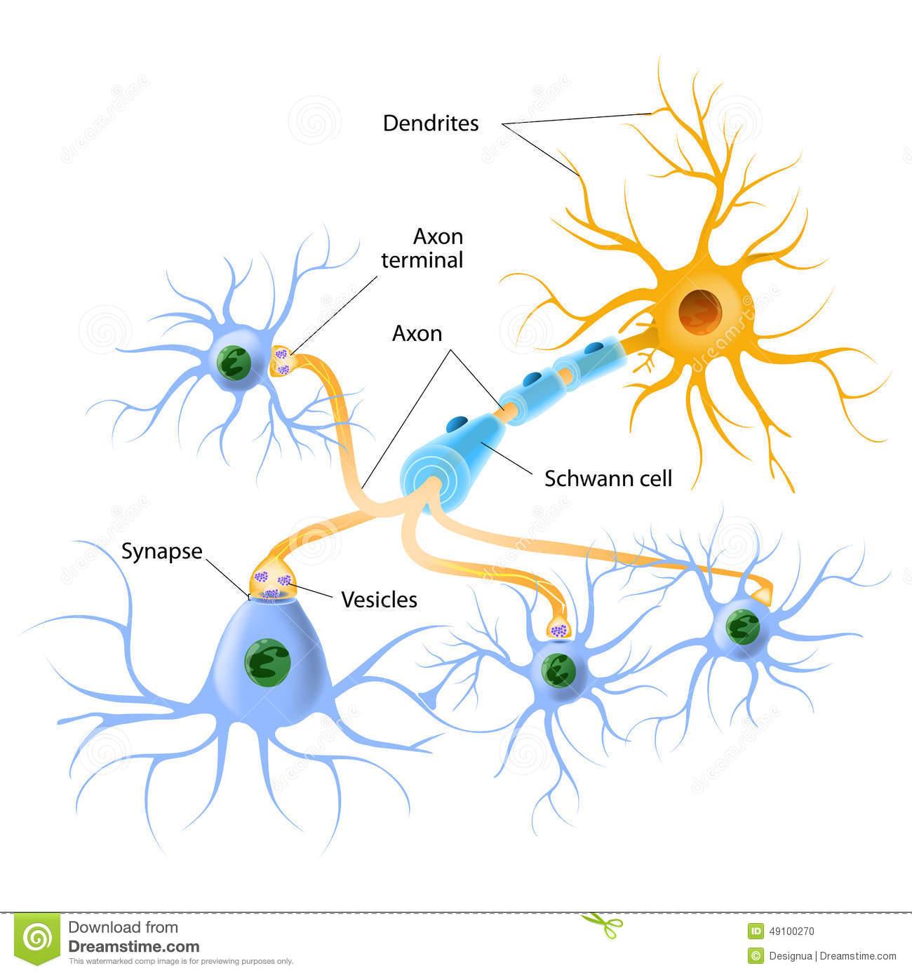 Serotonin Stock Illustrations.