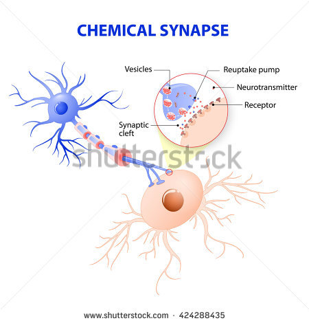Synapse Stock Images, Royalty.