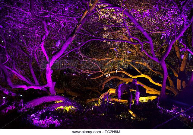 Enchanted Woodland Stock Photos & Enchanted Woodland Stock Images.