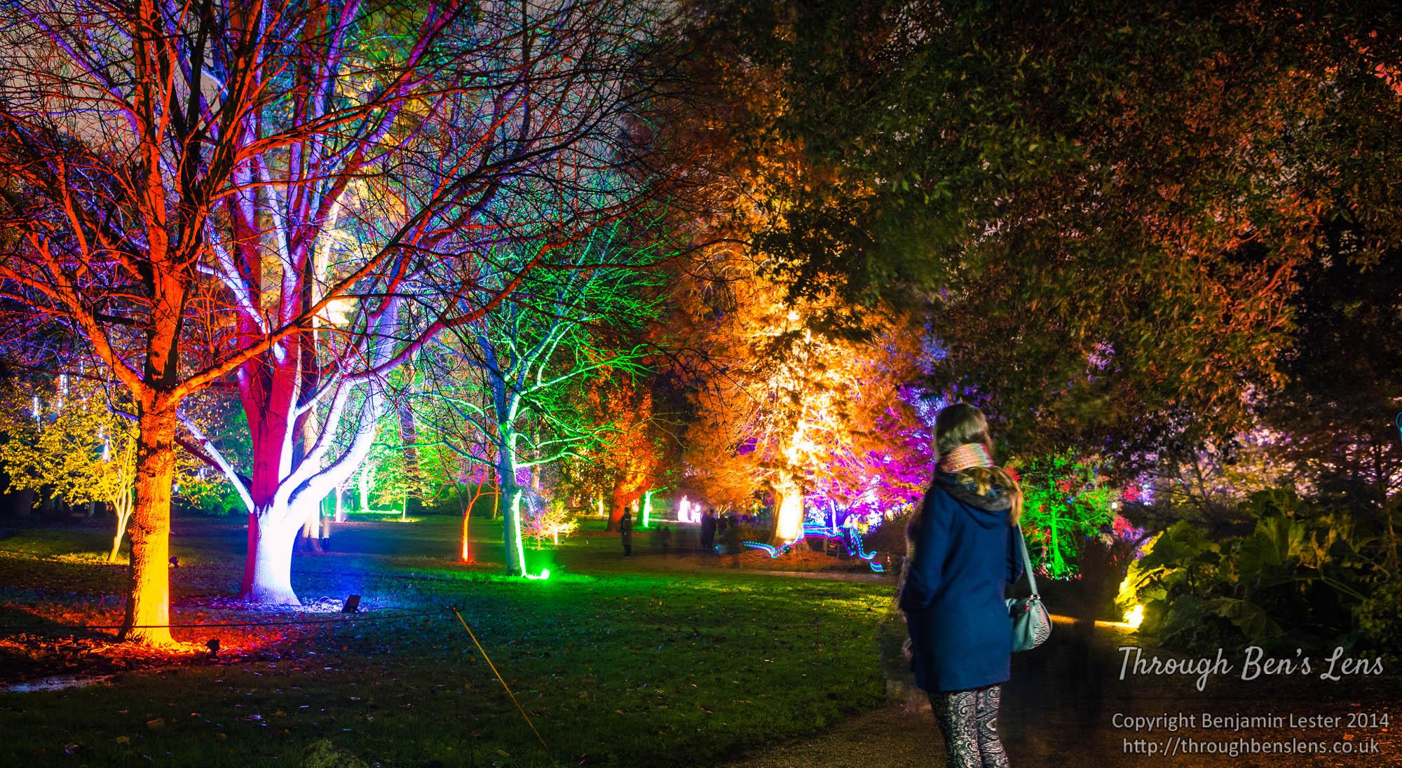 Syon Park Enchanted Woodland.