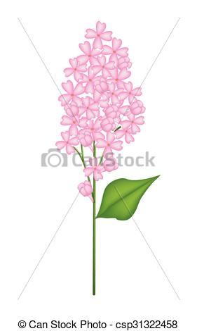 Clipart Vector of Pink Lilac or Syringa Vulgaris on White.