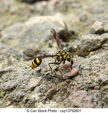 Stock Photography of A perfect wasp.