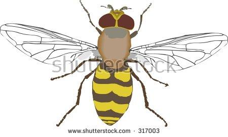Syrphidae Stock Vectors & Vector Clip Art.