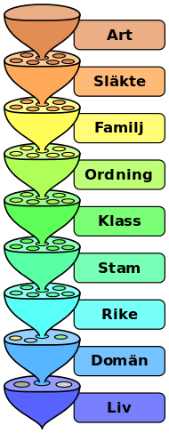 Systematik (biologi).