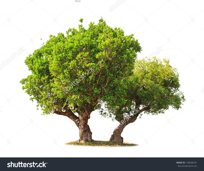 Jambul Syzygium Cumini Known Jambolan Plum Stock Photo 130648181.