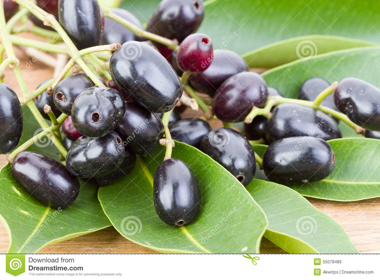 Syzygium Cumini Stock Photos, Images, & Pictures.