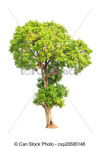 Stock Photo of Jambul (Syzygium cumini) also known as Jambolan.
