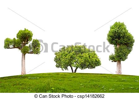 Stock Image of Jambul Syzygium cumini tree.