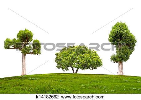 Stock Photo of Jambul Syzygium cumini tree k14182662.