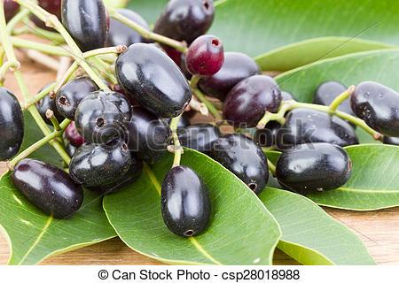 Pictures of Jambolan plum or Java plum 'Syzygium cumini (L) Skeels.