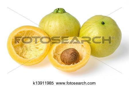 Stock Image of Syzygium jambos rose apple k13911985.