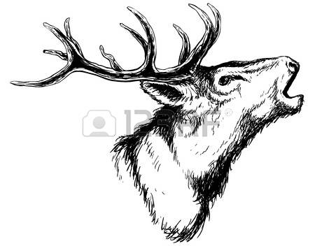 5,397 Buck Stock Vector Illustration And Royalty Free Buck Clipart.