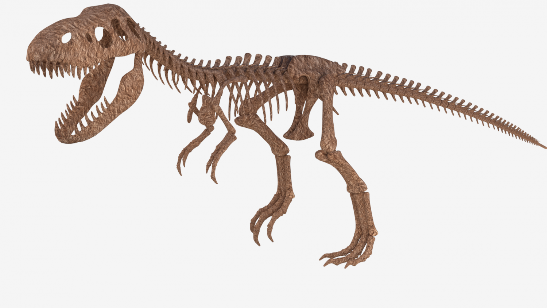 T Rex Skeleton Png & Free T Rex Skeleton.png Transparent.