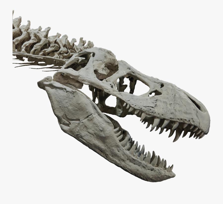 T Rex Skull Png.