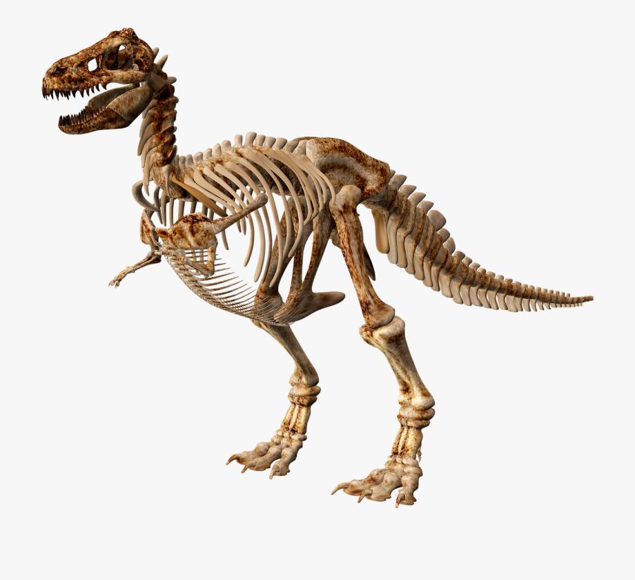 T Rex Skeleton Png.