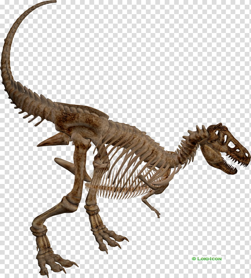 T Rex Skeleton transparent background PNG clipart.