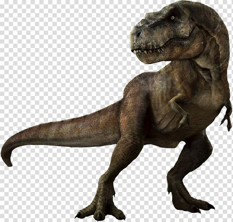 Tyrannosaurus rex Dinosaur Velociraptor Triceratops.
